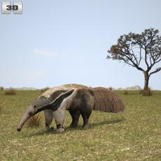 Giant Anteater 3D Model