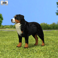 Bernese Mountain Dog 3D Model