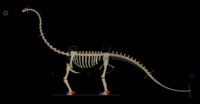 Free Dinosaur Skeleton + rig for Maya 1.0.0