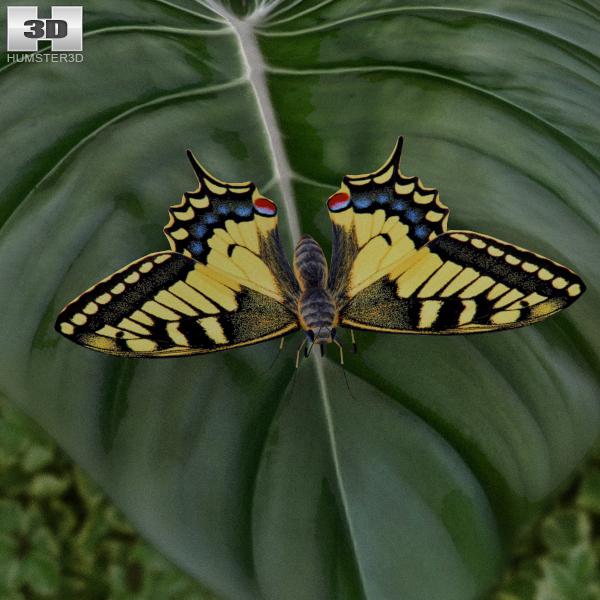 Machaon Butterfly 3D Model
