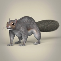 Realistic Squirrel 3D Model
