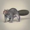 01 37 38 180 realistic squirrel 01 4