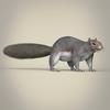 01 37 41 583 realistic squirrel 07 4