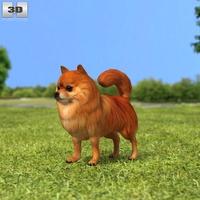 Pomeranian 3D Model