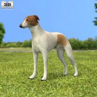 Greyhound 3D Model
