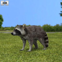 Raccoon 3D Model