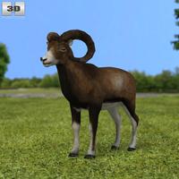 Mouflon 3D Model