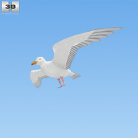 Common Gull 3D Model