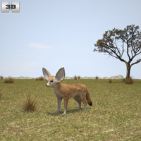 Fennec Fox 3D Model