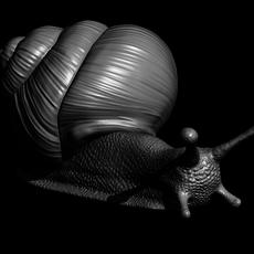 Snail 3D printable 3D Model