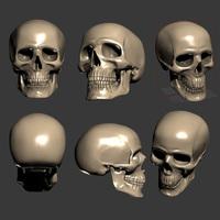 Human scull 3D Model