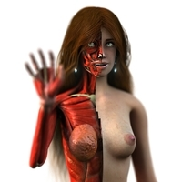 Anatomy Woman Anne 3D Model