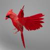 06 04 09 905 cardinal r2 4