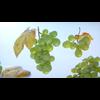 06 36 57 812 01 02 grapes mk3d 4