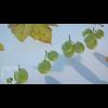 06 37 01 512 04 grapes mk3d 4