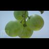 06 37 02 400 05 grapes mk3d 4