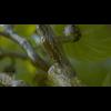 06 37 05 44 09 grapes mk3d 4