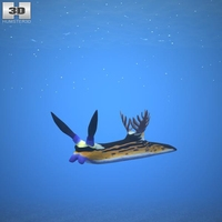 Nembrotha Megalocera 3D Model