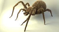 Shaggy spider 3D Model