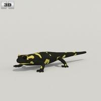 Spotted Salamander 3D Model