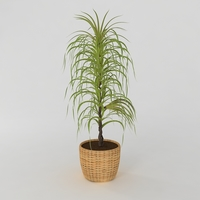 Decorative plant 3D Model
