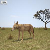 Golden Jackal 3D Model