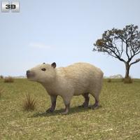 Capybara 3D Model
