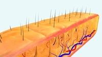 Under the skin medical 3D Model