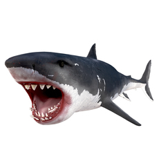 White Shark Rigged 3D Model