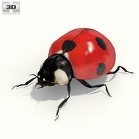Ladybird 3D Model