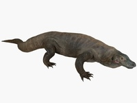 Komodo Dragon Animated 3D Model