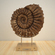 Mellitella ammonite and display stand 3D Model