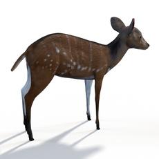 Bush buck 3D Model