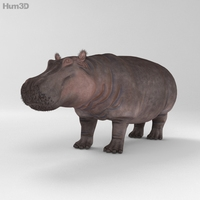 Hippopotamus HD 3D Model