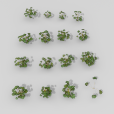 shrub set 3D Model