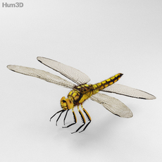 Dragonfly High Detailed 3D Model