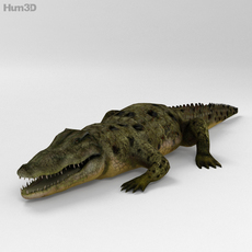 Common Crocodile High Detailed 3D Model