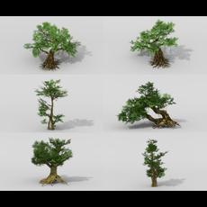 Banyan set 3D Model