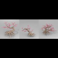 Peach blossom tree 3D Model