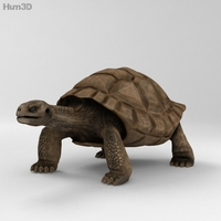 Galapagos Turtle High Detailed 3D Model