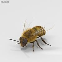Honey Bee High Detailed 3D Model