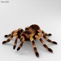 Tarantula High Detailed 3D Model