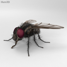 Housefly High Detailed 3D Model