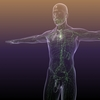 01 47 21 637 human lymphatic system 3d model free 4