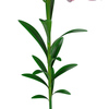 04 40 51 439 flower lily 0013 4
