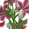 04 41 21 786 flower lily 0015 4