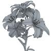 04 41 41 572 flower lily w 0001 4