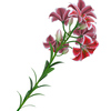 04 41 49 252 flower lily 0016 4