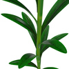 04 41 57 102 flower lily 0014 4