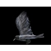 11 14 03 761 crows7 4